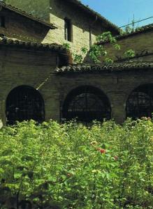Róże św. Franciszka