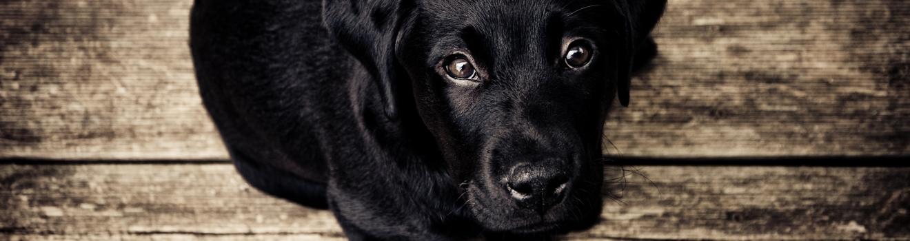 Być psem czy dzieckiem